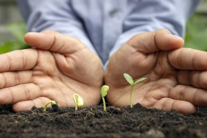 business person hold hands behind plants representing how to grow business